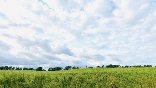 Whipple Rd(29 acres)<br>Bronson, MI 49028